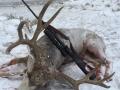 15-md-steve-deer-gun