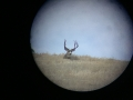 16-scope-deer