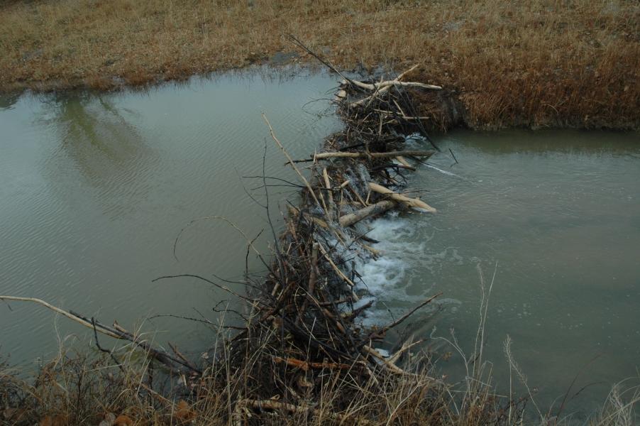Scenery-beaver-dam