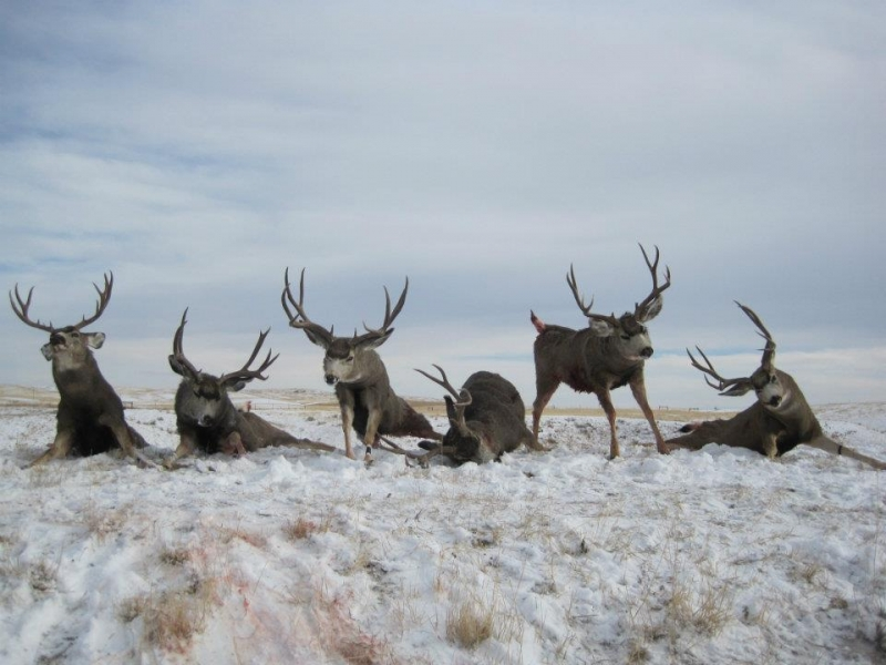 Ram Big Horn >> Gallery - Chase Hill Outfitters